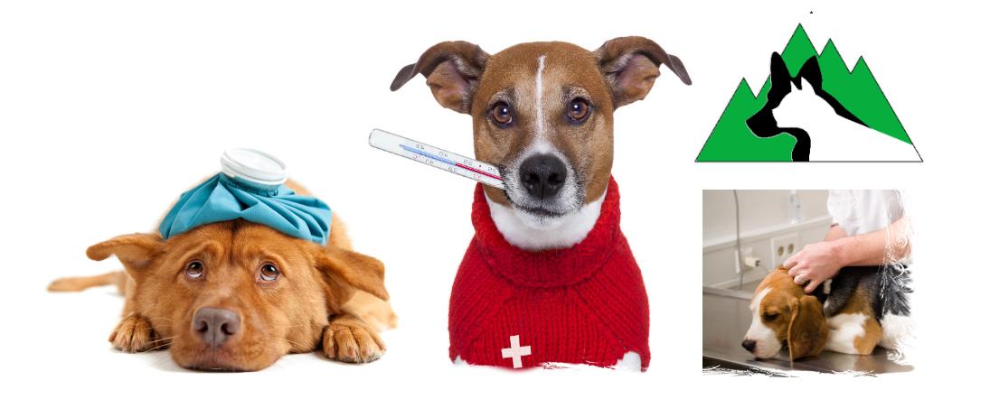 consultatii veterinare 1