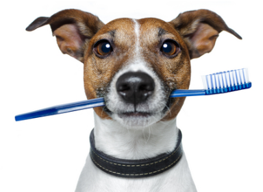 stomatologie canina